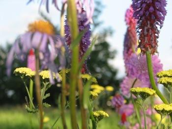 bloemen juni 2012